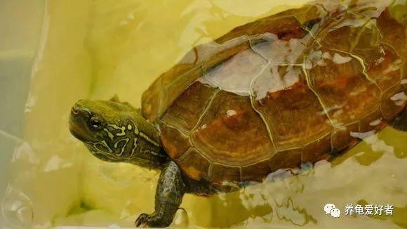 關於烏龜的一些小毛病,做個小小的總結