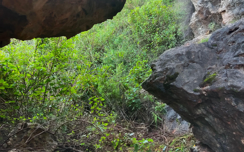 云南2岁男童、隐秘的山洞与一次未遂的拐卖计划