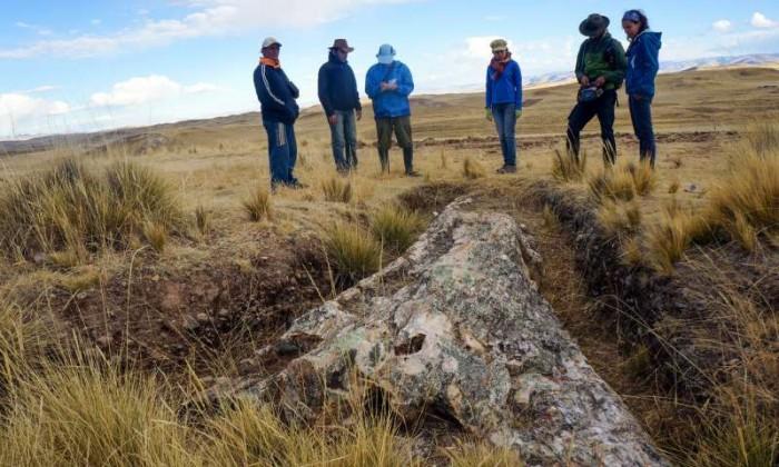 科学家在秘鲁发现树化石,揭示过去1000万年环境变化-第2张图片-IT新视野