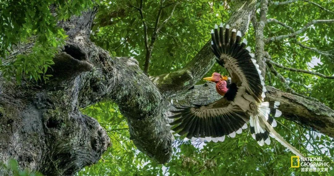 握在手里的鸟头,比象牙还血腥的真相
