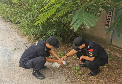 东港巡特警成功救助国家三有保护动物