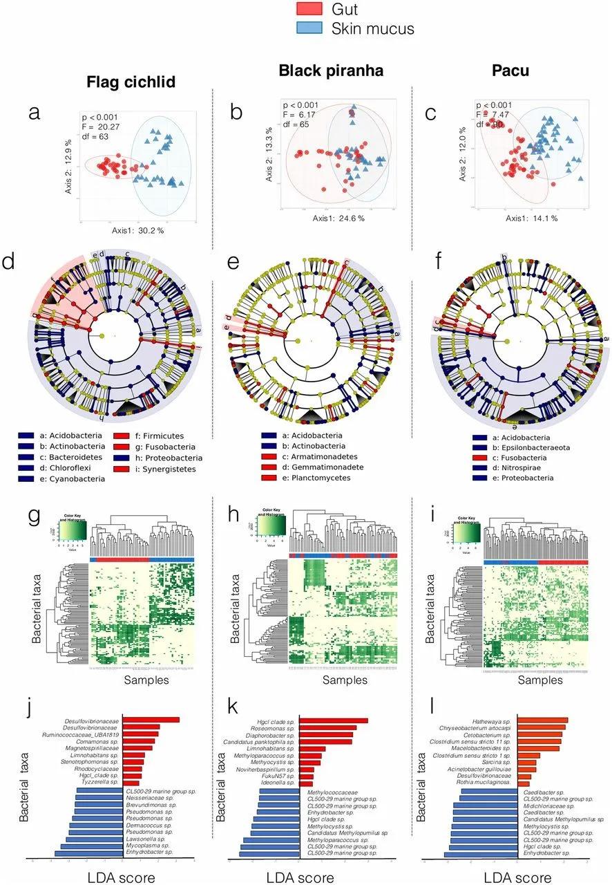 「论文解读」鱼皮和肠道微生物群显示寄主物种和栖息地的对比特征