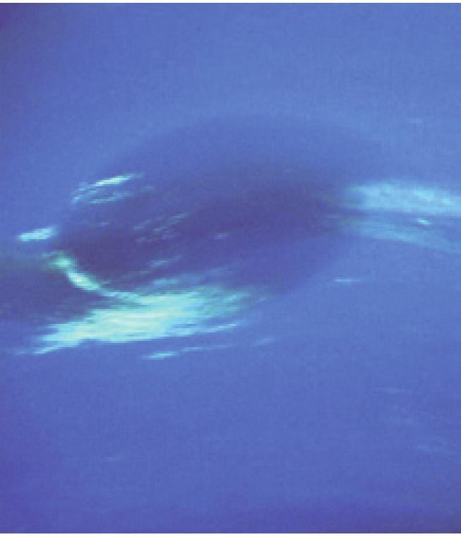 为什么说海王星是太阳系最恐怖的行星