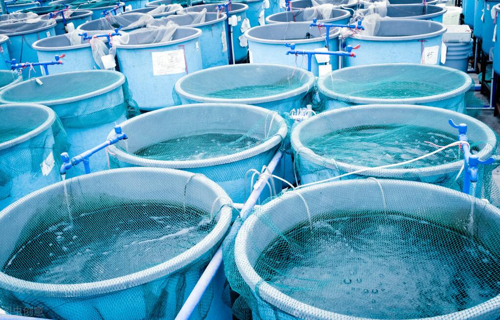 高密度養殖循環水體中養菌要不要加紅糖水?了解碳源添加的真相