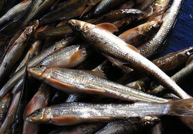 曾经是农村人的美食,如今野生几乎很少见的五种鱼,你有印象吗?