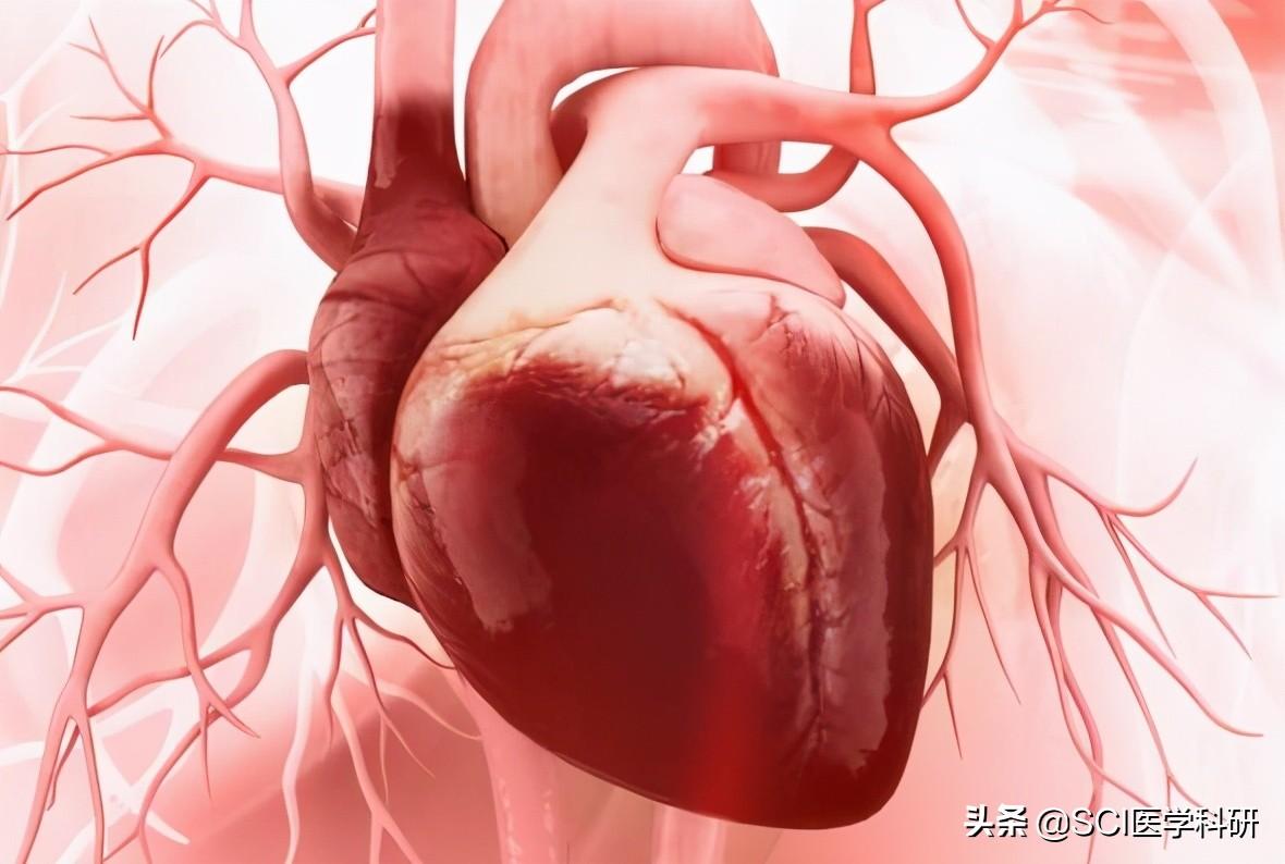 体内脂肪可以保护女性免受心脏病困扰吗?