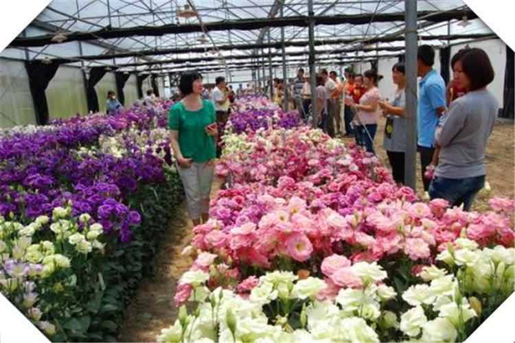 明年在农村种植什么,经济效益比较高?推荐一些