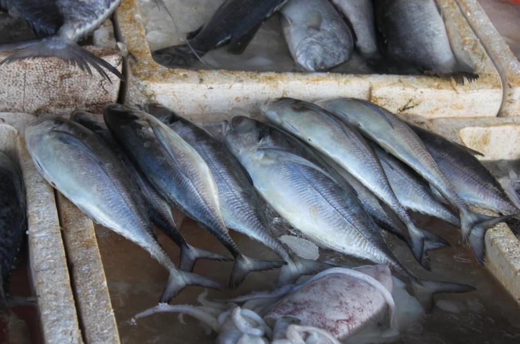 """荒唐至极!自己都不吃的""""福岛特产""""鱼,日本将其大量出口到泰国"""