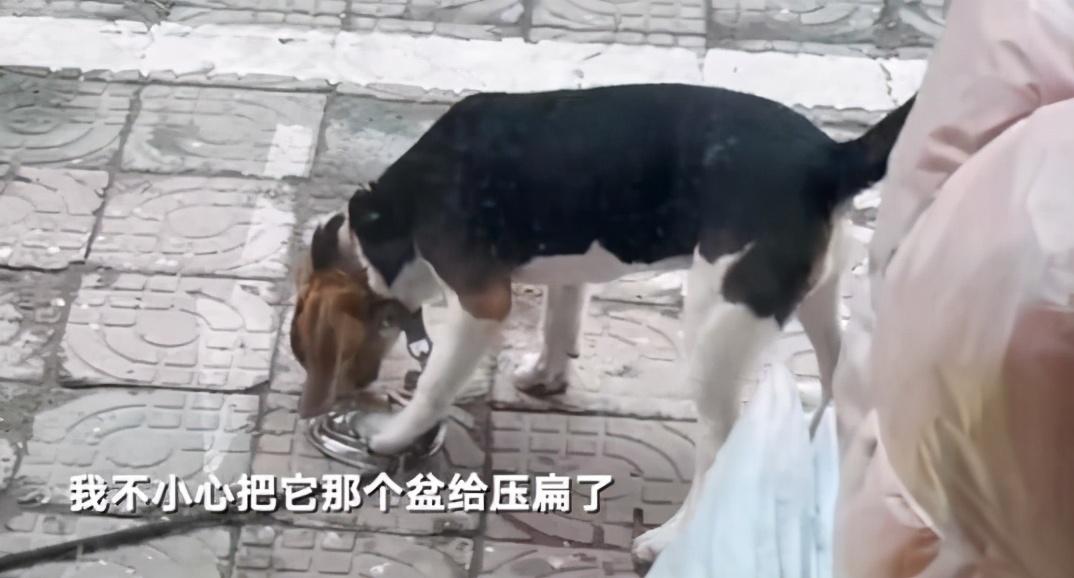 饭盆被主人压扁,狗狗都要委屈哭了:你看你干的好事