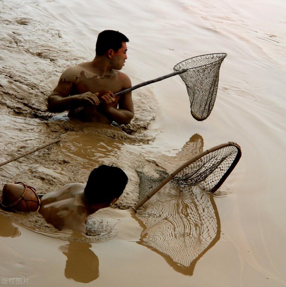 """小浪底泄洪排沙19年,引发黄河""""流鱼"""",下游生态陷入危机?"""