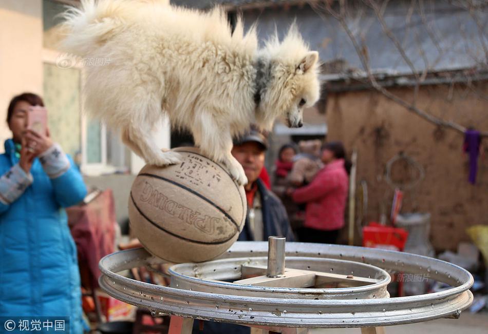 农民训练自家猪狗鸡羊多年,满院动物个个身怀绝技成为杂技高手