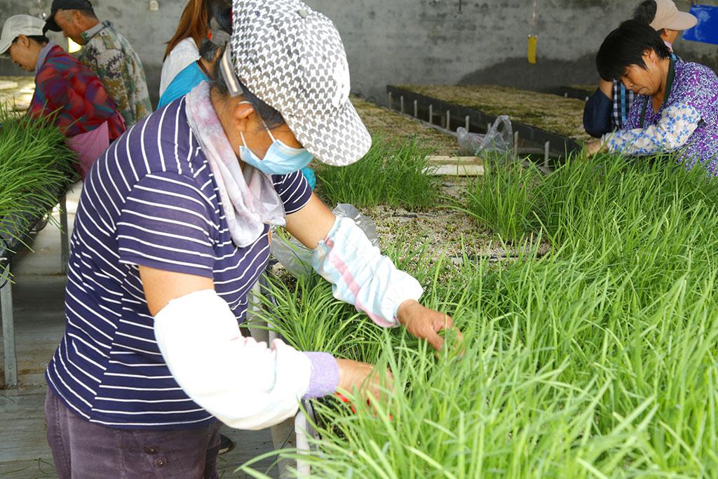 好山好水科技种田,水培蔬菜就是好