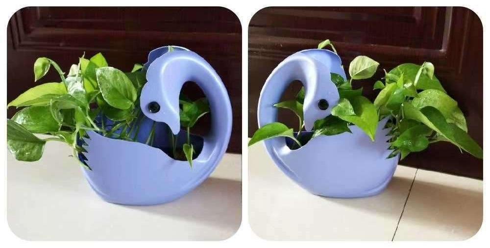 空洗衣液瓶子不要扔,只需几步就能变成漂亮的花盆 家务妙招 第12张