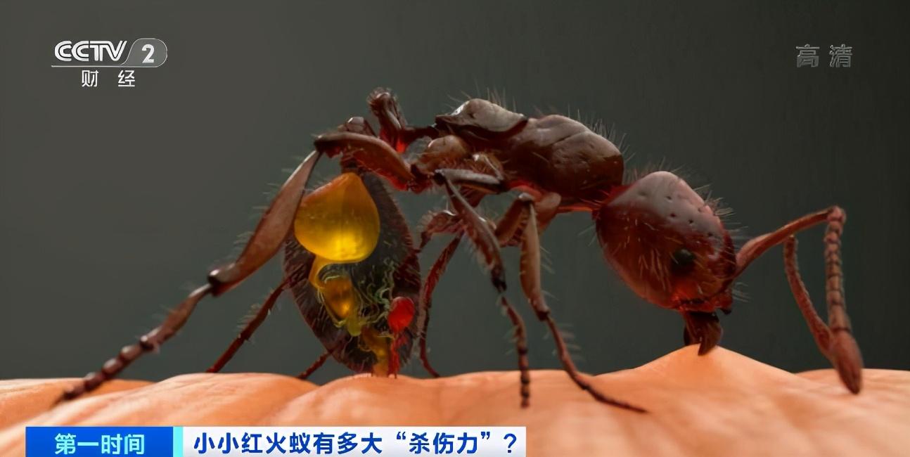 红火蚁已蔓延12省,南方已经失守?国家九部门联合防控有用吗?