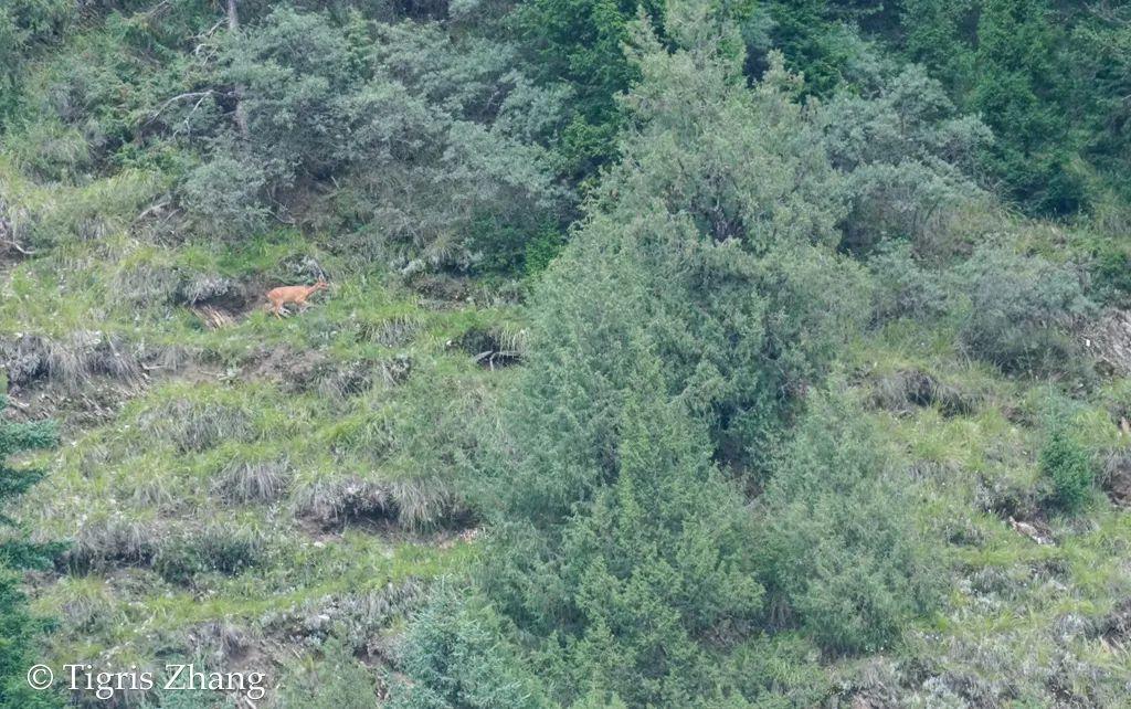 若尔盖生物大盘点(上)——高原上的哺乳动物