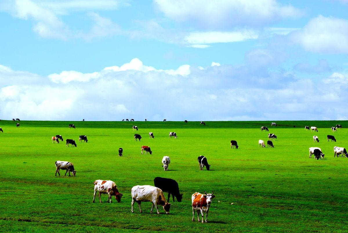 骑在羊背上的国家是哪个国家(巴西是骑在羊背上的国家吗)