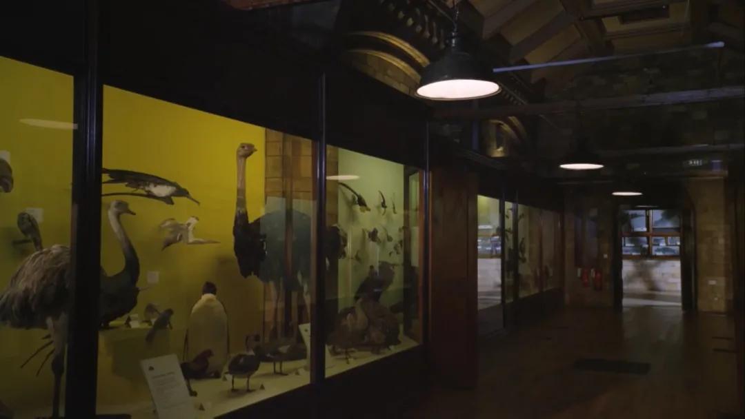 和大卫·爱登堡一起,体验栩栩如生的博物馆奇妙夜