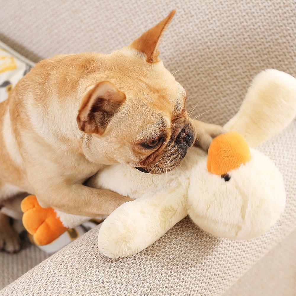 狗發情很可怕?了解狗的發情期,不讓主人尷尬不讓狗狗生病