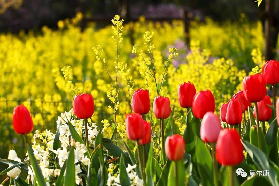 一年之肌在于春,<a href='http://www.fooiga.com/guanyuwomen/1.html' target='_blank' title='复尔康'><strong>复尔康</strong></a>的初春护肤指南,你get到了吗?复尔康